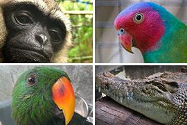 tasikoki-animals
